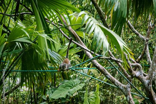 variedad de flora y fauna del ecuador