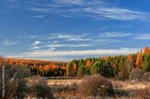 View of the Siberian autumn taiga on a frosty September morning.