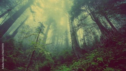 Madio ambiente ,flora y fauna