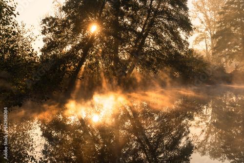 Drzewa nad rzeką, światło we mgle, rzeka Czerniawka, Staw w Białej, gmina Zgierz